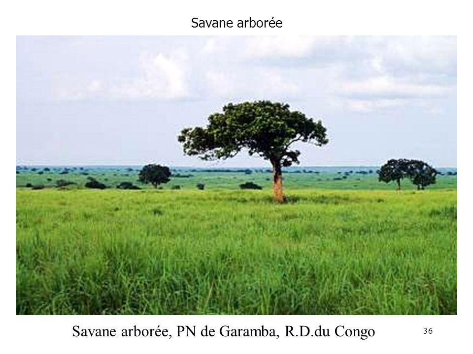 Savane arborée Savane arborée, PN de Garamba, R.D.du Congo 36