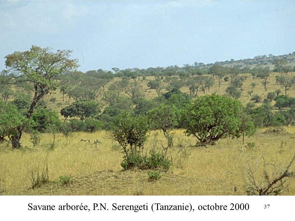 Savane arborée, P.N. Serengeti (Tanzanie), octobre 2000 37