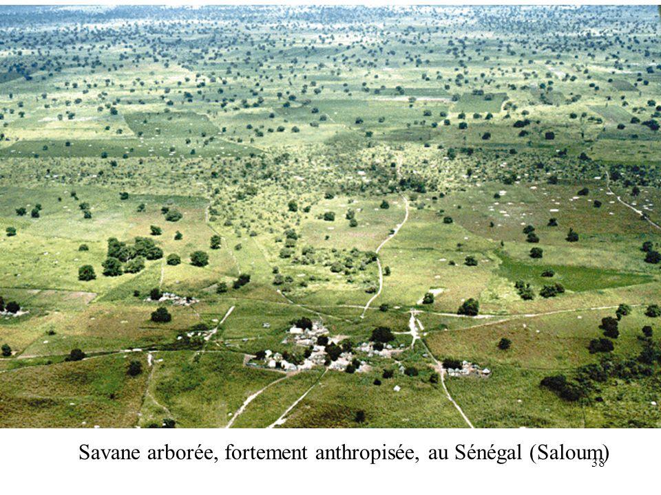Savane arborée, fortement anthropisée, au Sénégal (Saloum) 38