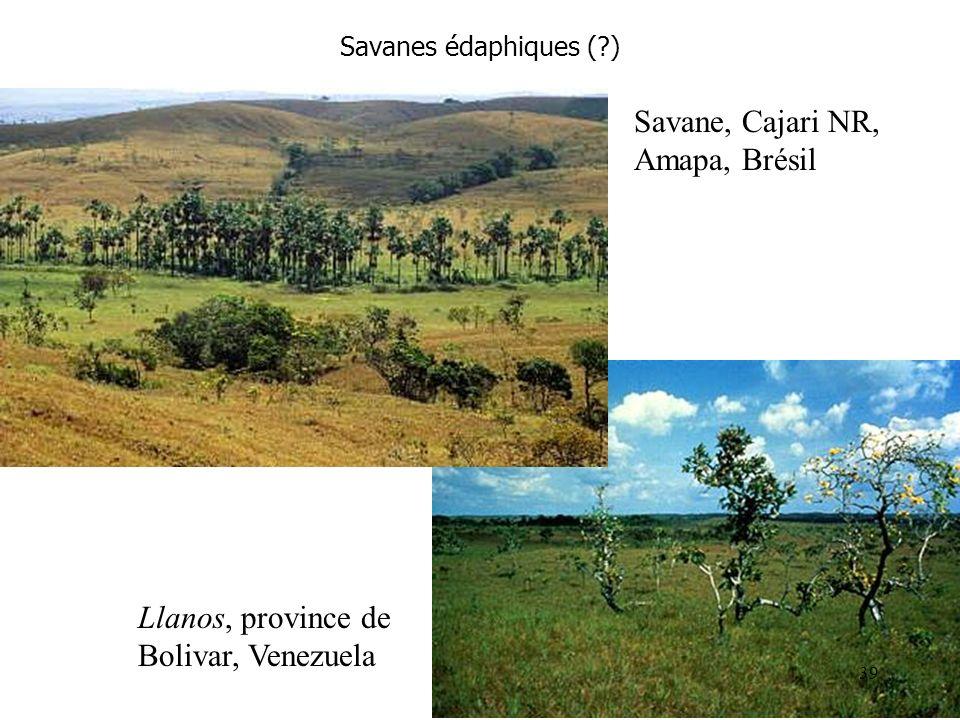 Savanes édaphiques (?) Savane, Cajari NR, Amapa, Brésil Llanos, province de Bolivar, Venezuela 39