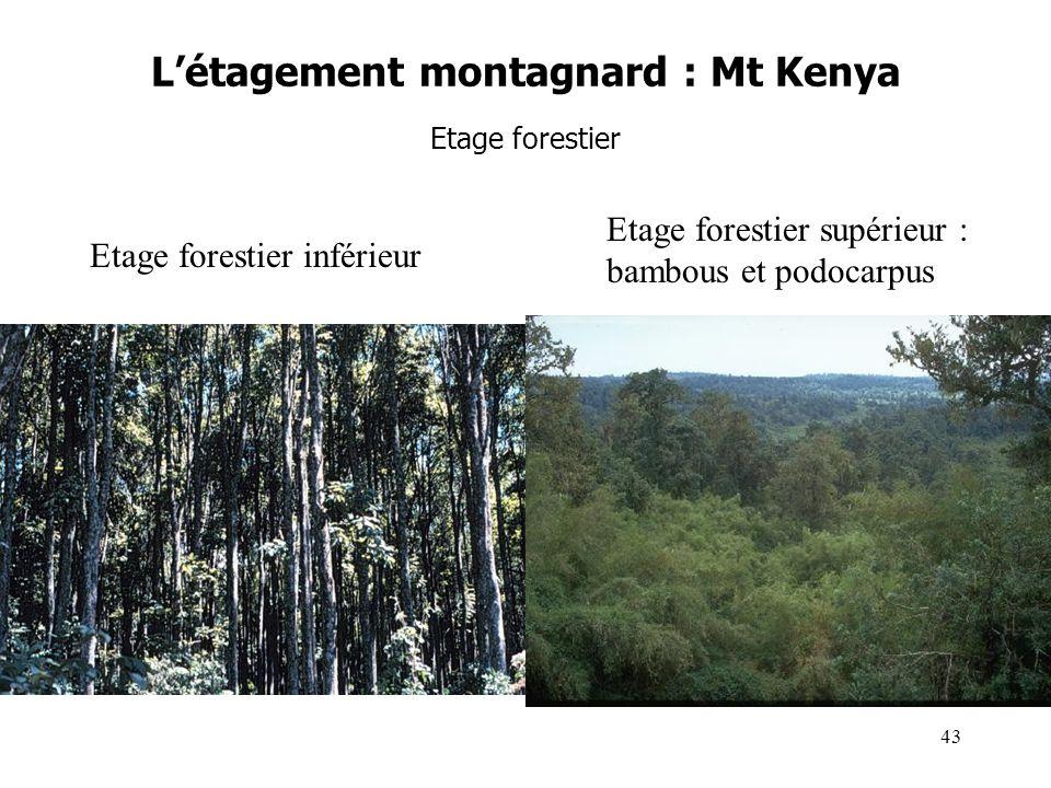 Létagement montagnard : Mt Kenya Etage forestier Etage forestier inférieur Etage forestier supérieur : bambous et podocarpus 43
