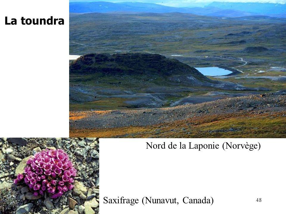 La toundra Nord de la Laponie (Norvège) Saxifrage (Nunavut, Canada) 48