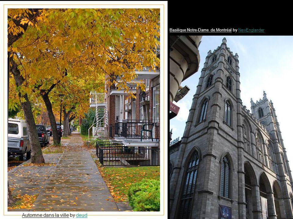 Automne dans la ville by deuddeud Basilique Notre-Dame de Montréal by NewEnglanderNewEnglander