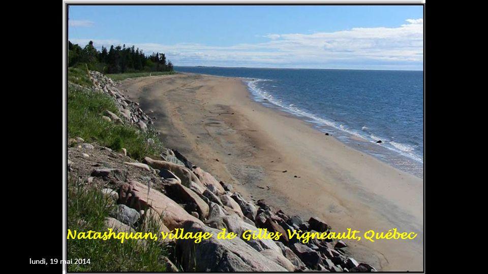 Les Baleines à Tadousac au Québec