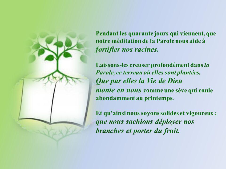 En ce temps de carême, nous sommes invités à nous « grounder », à nous enraciner dans la Parole de Dieu.