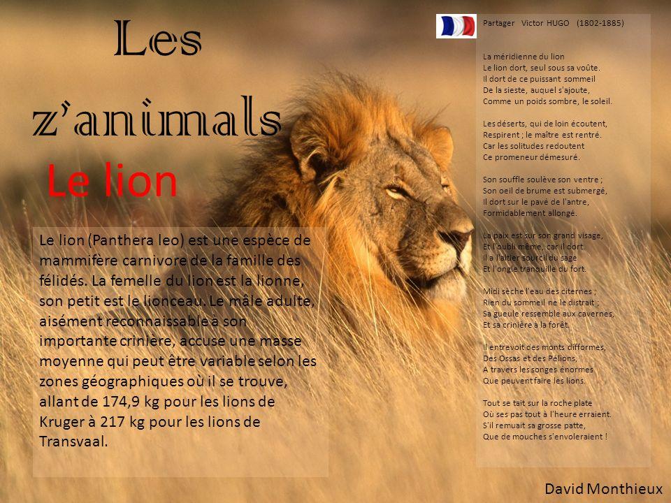 Les zanimals Le lion Le lion (Panthera leo) est une espèce de mammifère carnivore de la famille des félidés. La femelle du lion est la lionne, son pet