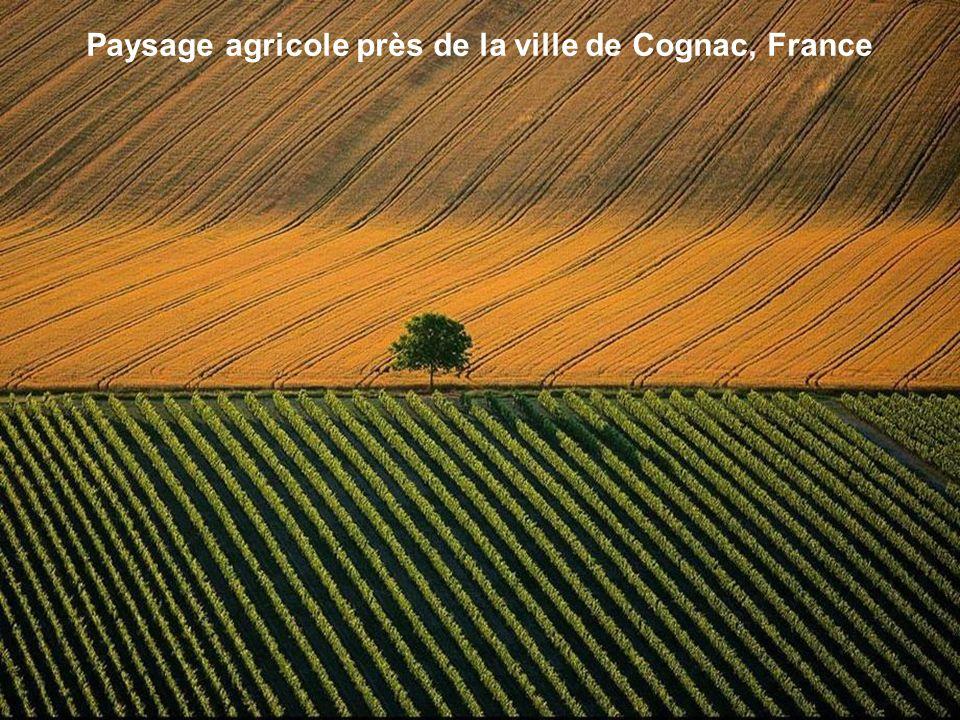 Paysage agricole près de la ville de Cognac, France