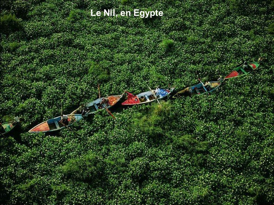 Le Nil, en Egypte