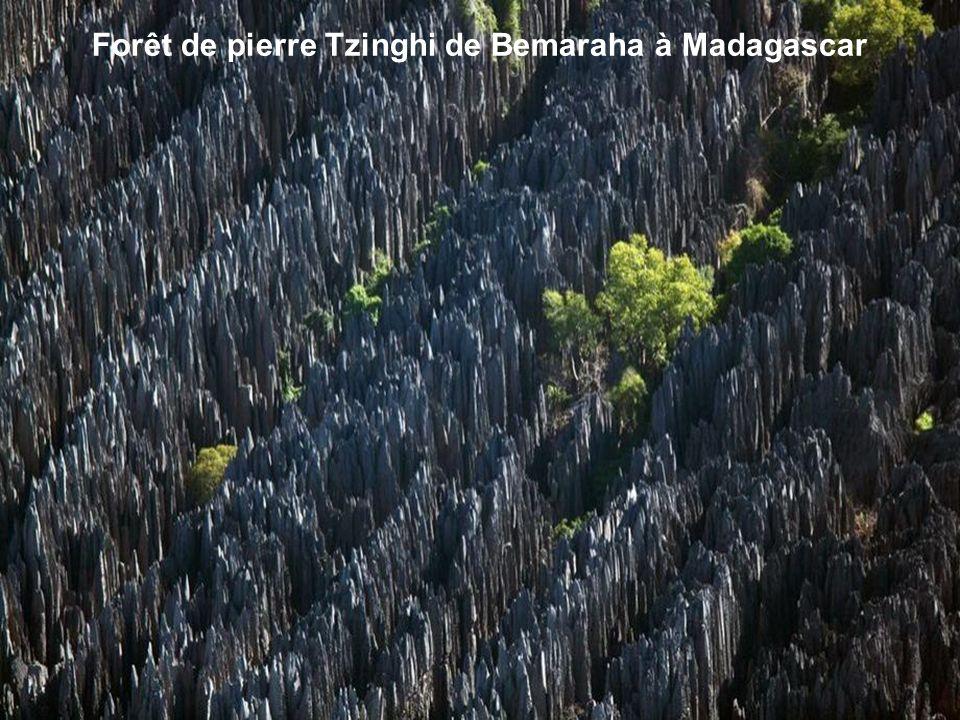 Forêt de pierre Tzinghi de Bemaraha à Madagascar
