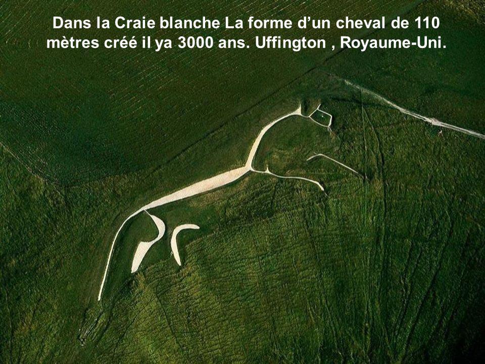 Dans la Craie blanche La forme dun cheval de 110 mètres créé il ya 3000 ans. Uffington, Royaume-Uni.