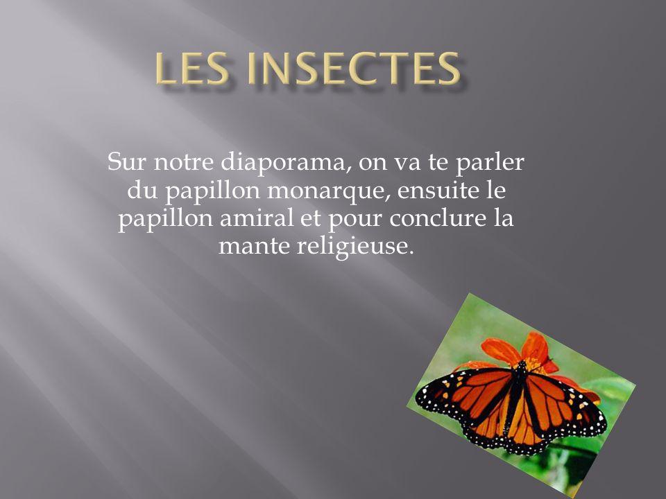 Les papillons monarques sont reconnus par ses belles couleurs vives.