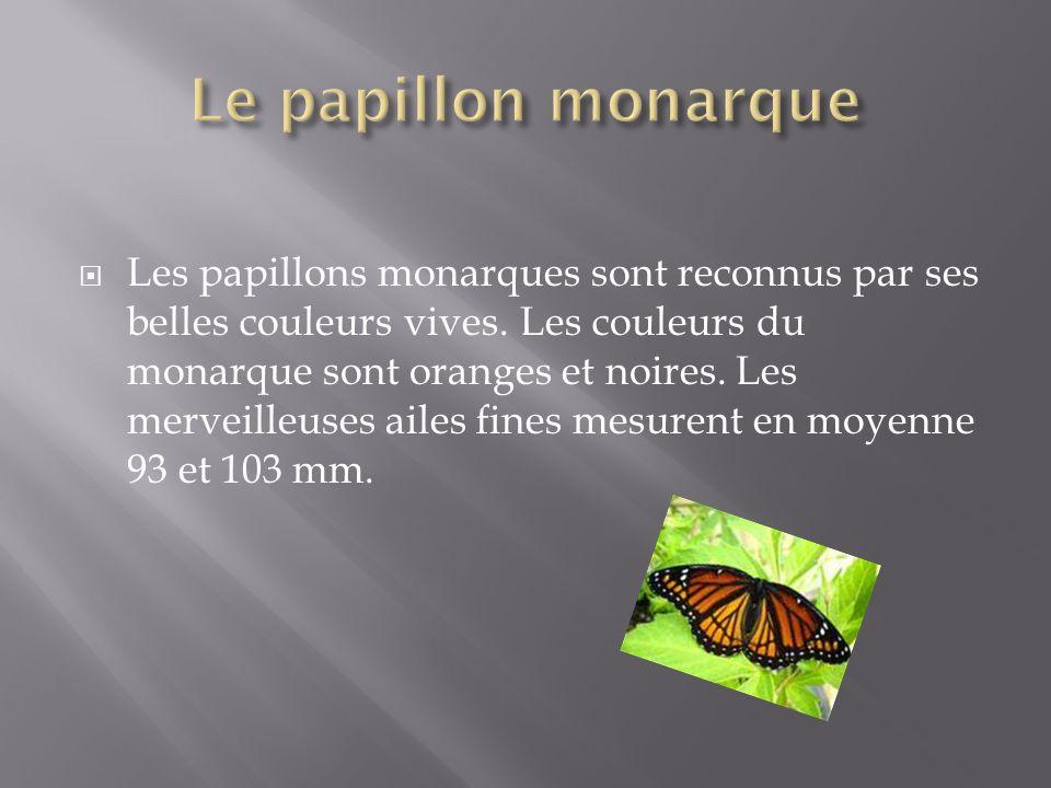 Dès lété, le monarque revient au Canada, mais en cour de route, il meurt ( les femelles après avoir pondu leurs œufs, elles meurent).