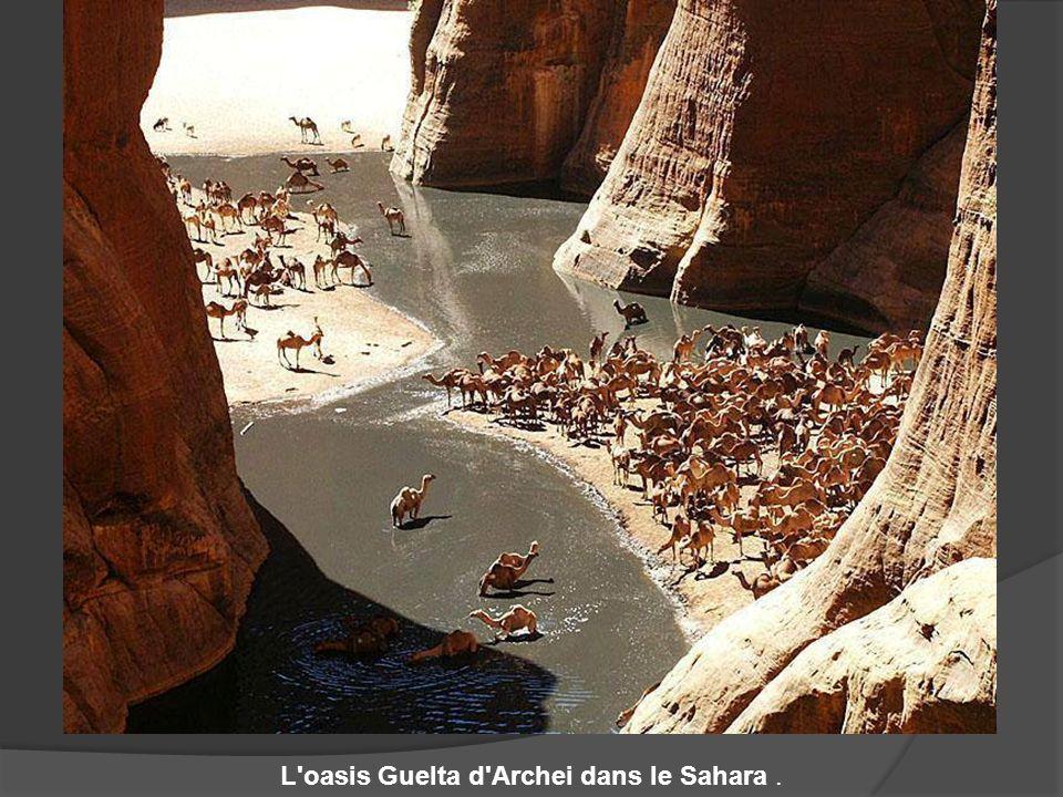 L'oasis Guelta d'Archei dans le Sahara.