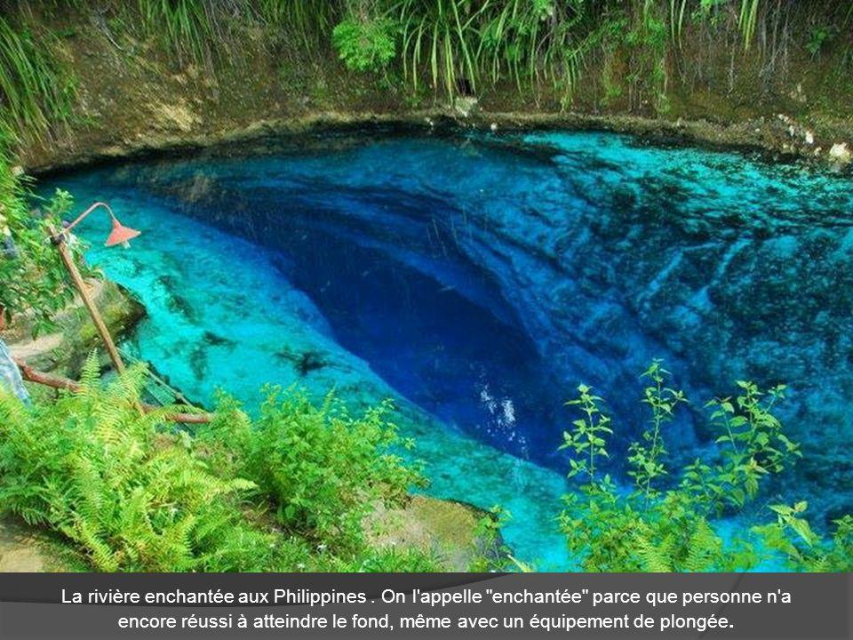 La rivière enchantée aux Philippines. On l'appelle