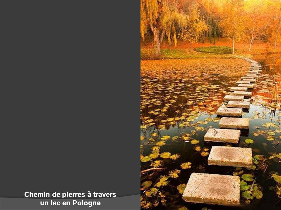 Chemin de pierres à travers un lac en Pologne