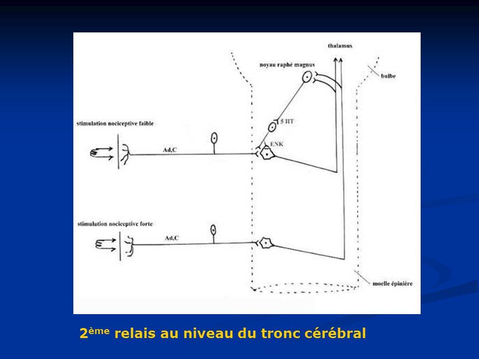 2 ème relais au niveau du tronc cérébral