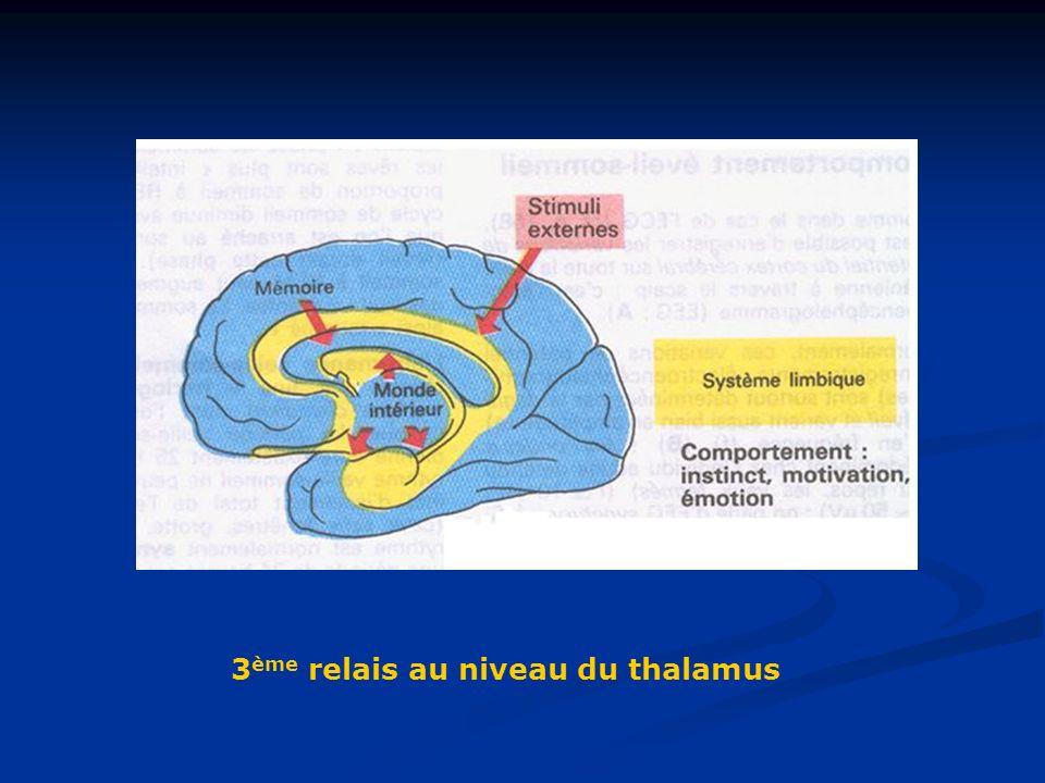 3 ème relais au niveau du thalamus