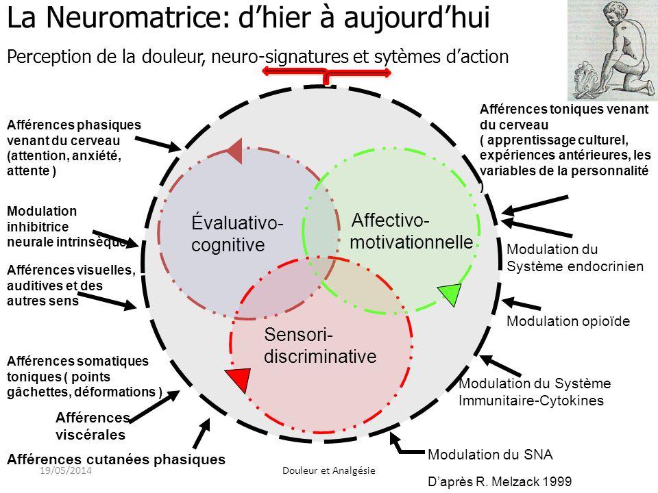 Évaluativo- cognitive Sensori- discriminative Affectivo- motivationnelle La Neuromatrice: dhier à aujourdhui Perception de la douleur, neuro-signatures et sytèmes daction Afférences phasiques venant du cerveau (attention, anxiété, attente ) Modulation inhibitrice neurale intrinsèque Afférences visuelles, auditives et des autres sens Afférences somatiques toniques ( points gâchettes, déformations ) Afférences viscérales Afférences cutanées phasiques Modulation du SNA Modulation du Système Immunitaire-Cytokines Modulation opioïde Modulation du Système endocrinien Afférences toniques venant du cerveau ( apprentissage culturel, expériences antérieures, les variables de la personnalité ) Daprès R.
