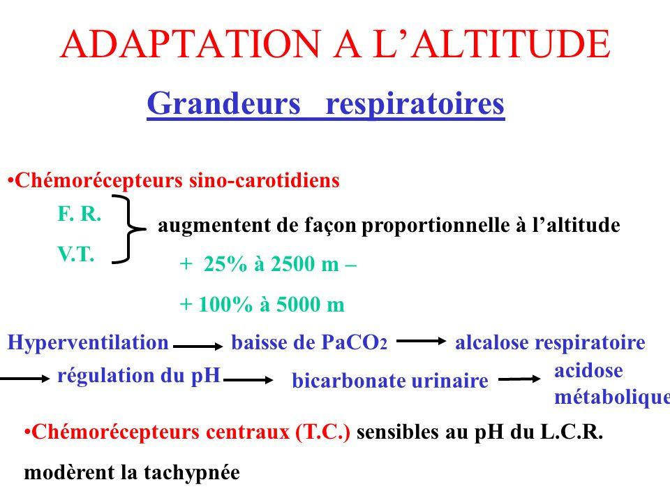 ADAPTATION A LALTITUDE Grandeurs respiratoires F. R. V.T. augmentent de façon proportionnelle à laltitude + 25% à 2500 m – + 100% à 5000 m Hyperventil