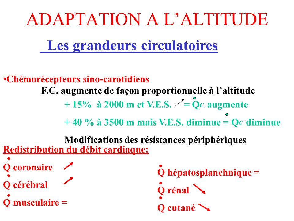 ADAPTATION A LALTITUDE Les grandeurs circulatoires F.C. augmente de façon proportionnelle à laltitude + 15% à 2000 m et V.E.S. = Q C augmente + 40 % à