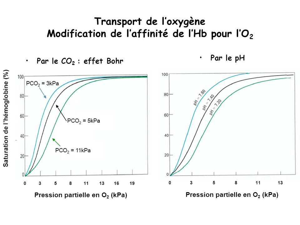 Transport de loxygène Modification de laffinité de lHb pour lO 2 Par le CO 2 : effet Bohr Par le pH Pression partielle en O 2 (kPa)