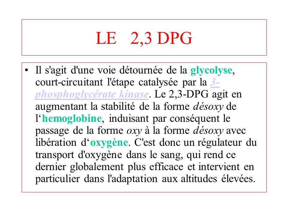 LE 2,3 DPG Il s'agit d'une voie détournée de la glycolyse, court-circuitant l'étape catalysée par la 3- phosphoglycérate kinase. Le 2,3-DPG agit en au