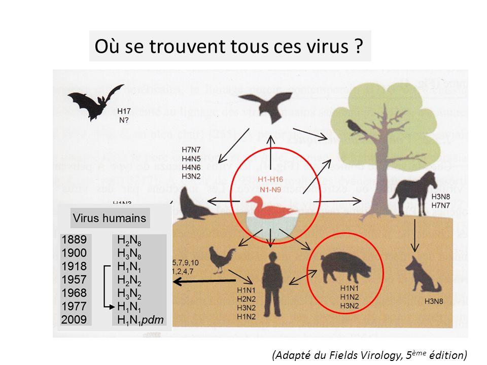 Où se trouvent tous ces virus ? (Adapté du Fields Virology, 5 ème édition)