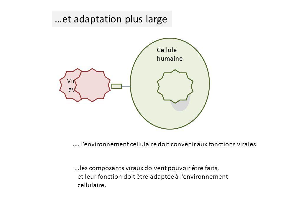 Cellule humaine Virus aviaire …et adaptation plus large...les composants viraux doivent pouvoir être faits, et leur fonction doit être adaptée à lenvironnement cellulaire, ….