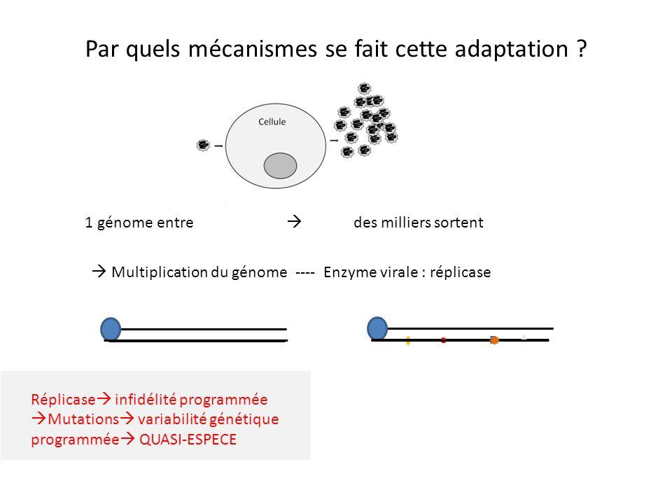 Par quels mécanismes se fait cette adaptation ? 1 génome entre des milliers sortent Multiplication du génome ---- Enzyme virale : réplicase Réplicase