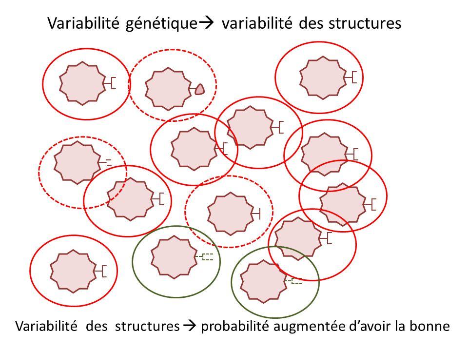 Variabilité génétique variabilité des structures Variabilité des structures probabilité augmentée davoir la bonne