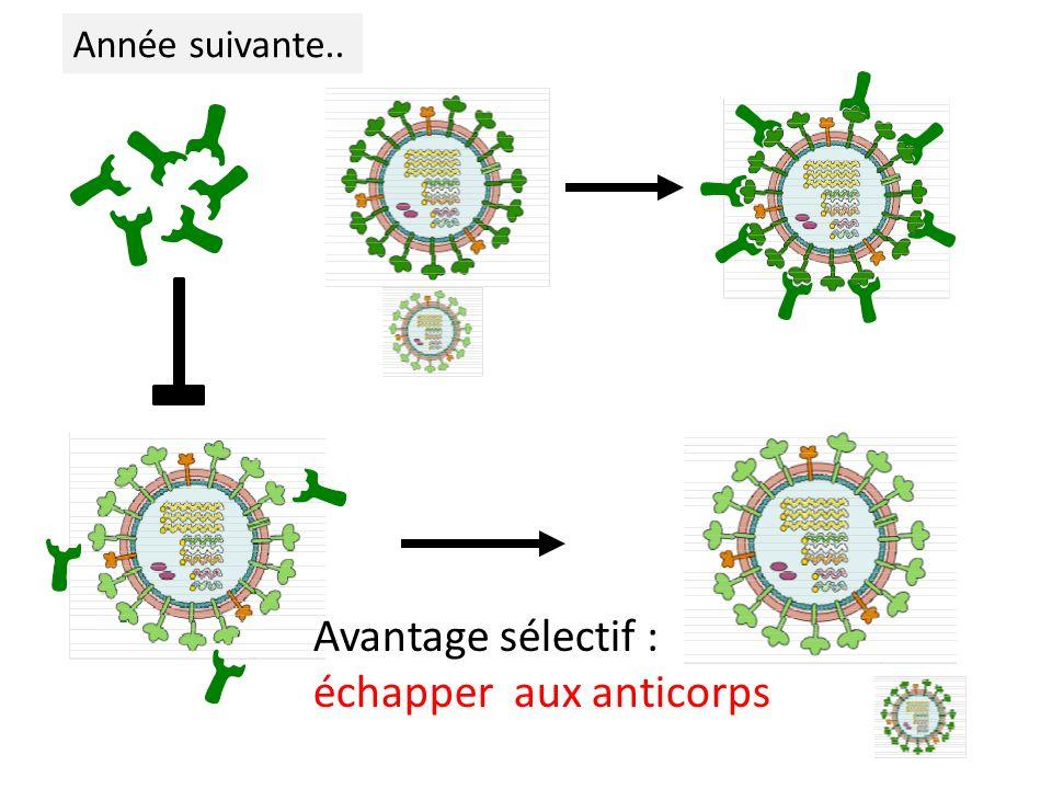 Année suivante.. Avantage sélectif : échapper aux anticorps