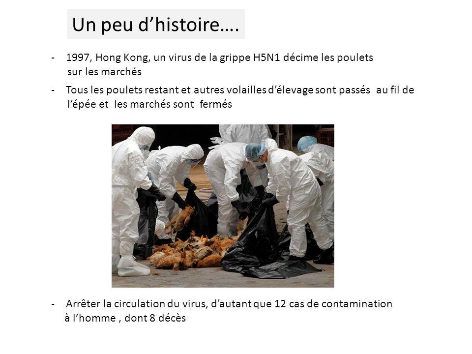-1997, Hong Kong, un virus de la grippe H5N1 décime les poulets sur les marchés -Tous les poulets restant et autres volailles délevage sont passés au fil de lépée et les marchés sont fermés -Arrêter la circulation du virus, dautant que 12 cas de contamination à lhomme, dont 8 décès Un peu dhistoire….