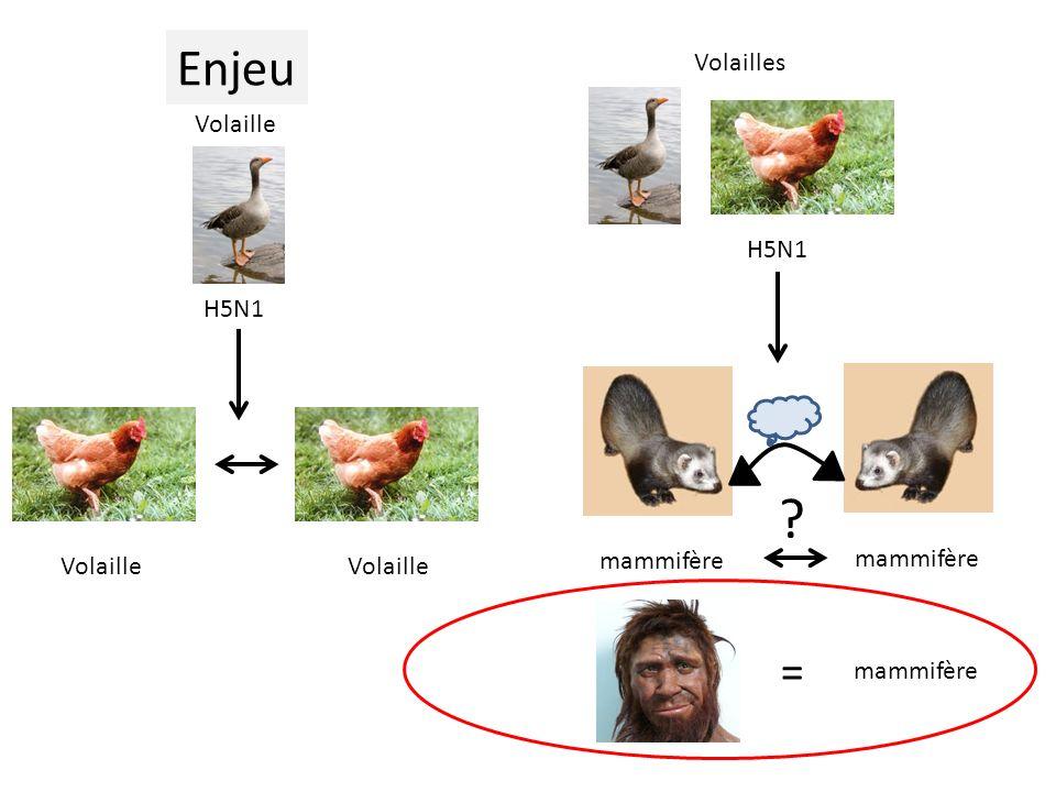 Virus aviaire Cellule humaine X Cellule humaine Virus aviaire Nécessité dadaptation du récepteur