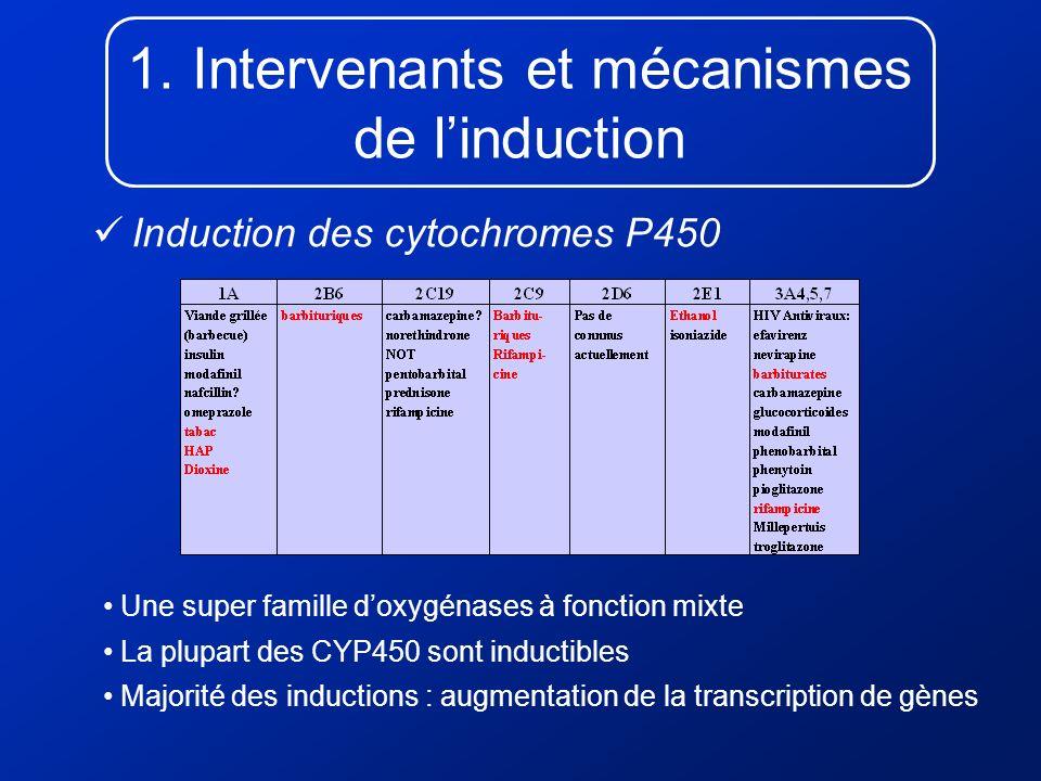 1. Intervenants et mécanismes de linduction Induction des cytochromes P450 Une super famille doxygénases à fonction mixte La plupart des CYP450 sont i