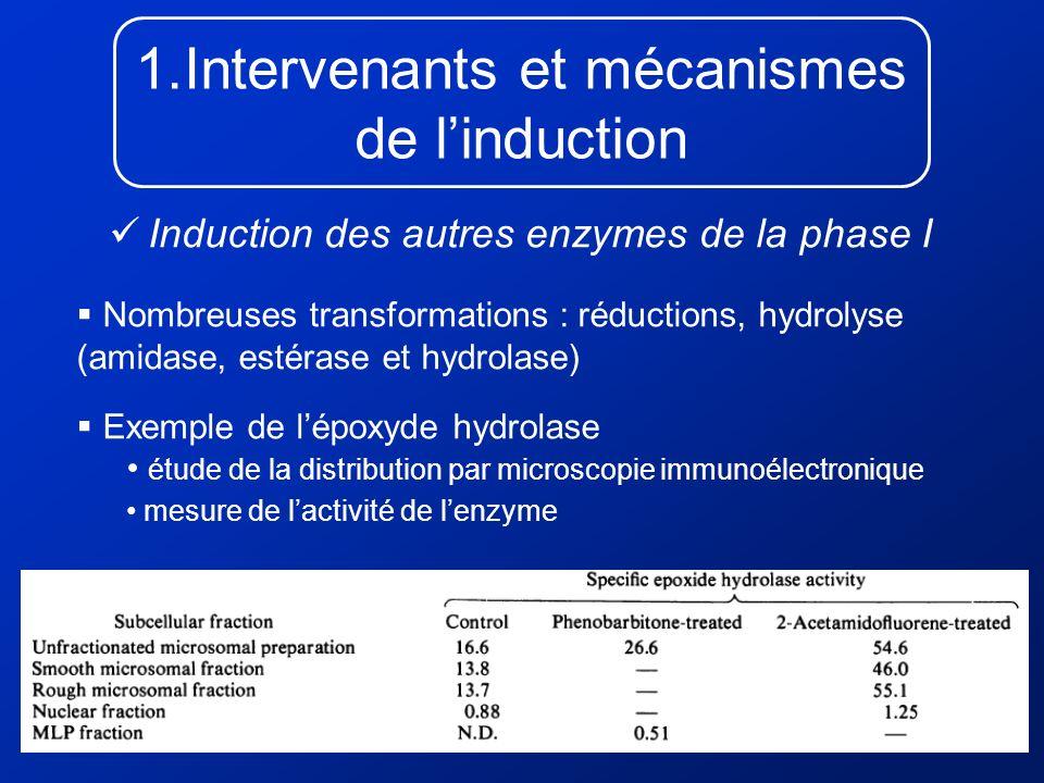 1.Intervenants et mécanismes de linduction Induction des autres enzymes de la phase I Nombreuses transformations : réductions, hydrolyse (amidase, est