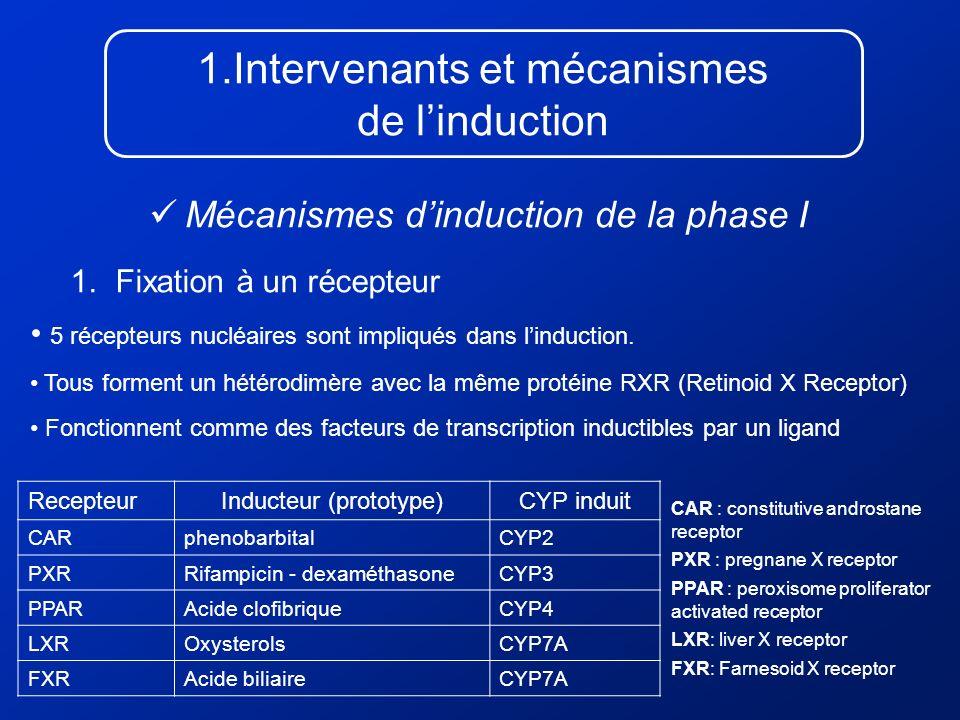 1.Intervenants et mécanismes de linduction Mécanismes dinduction de la phase I 1. Fixation à un récepteur RecepteurInducteur (prototype)CYP induit CAR