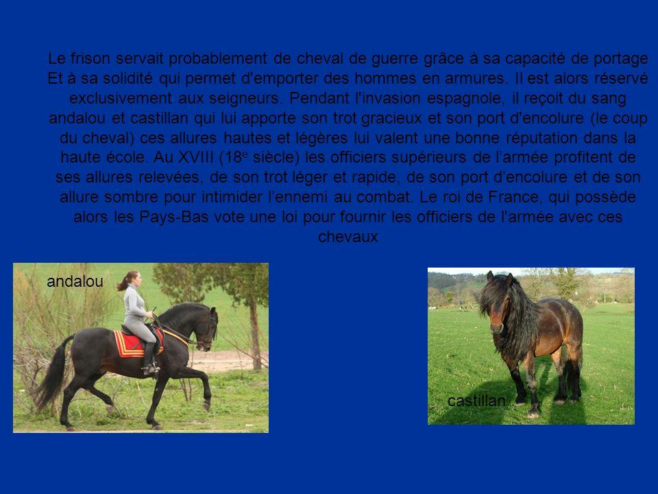 Le frison servait probablement de cheval de guerre grâce à sa capacité de portage Et à sa solidité qui permet d'emporter des hommes en armures. Il est