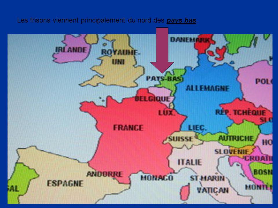 Les frisons viennent principalement du nord des pays bas.