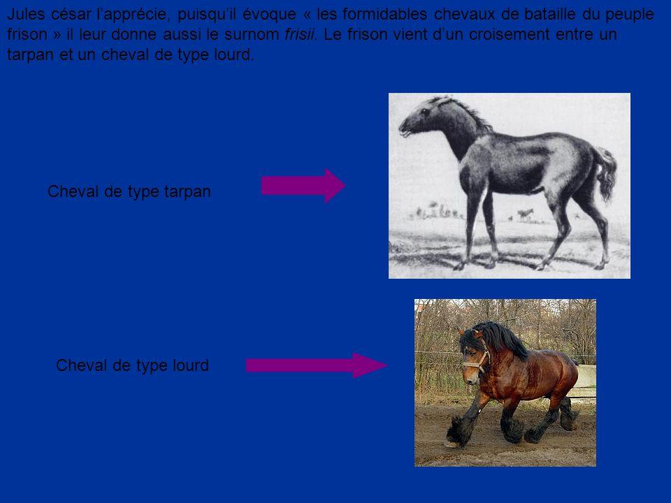 Jules césar lapprécie, puisquil évoque « les formidables chevaux de bataille du peuple frison » il leur donne aussi le surnom frisii. Le frison vient