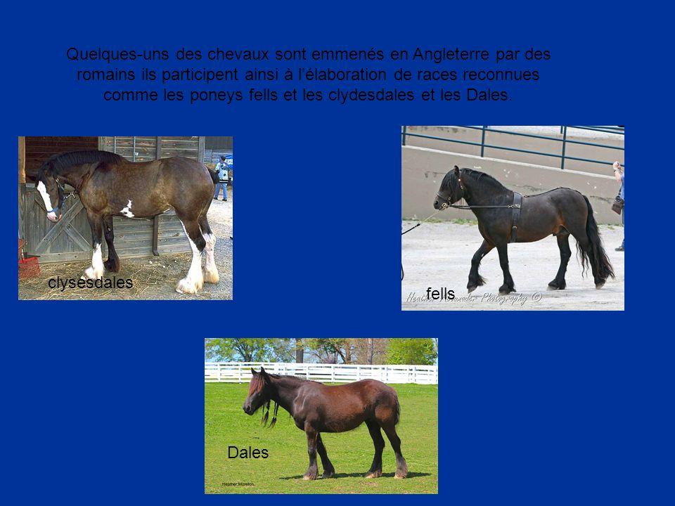 Quelques-uns des chevaux sont emmenés en Angleterre par des romains ils participent ainsi à lélaboration de races reconnues comme les poneys fells et