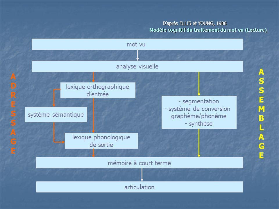 Daprès ELLIS et YOUNG, 1988 Modèle cognitif du traitement du mot vu (Lecture) Modèle cognitif du traitement du mot vu (Lecture) mot vu analyse visuell