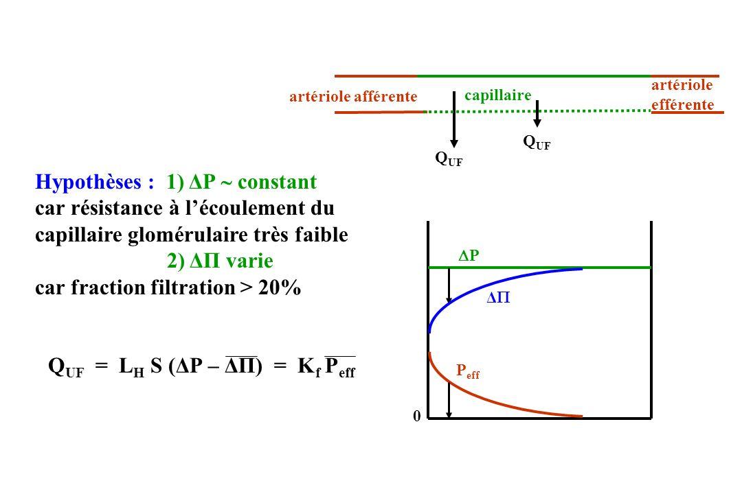 Q UF = L H S (ΔP – ΔΠ) = K f P eff P Δ P eff 0 Hypothèses : 1) ΔP constant car résistance à lécoulement du capillaire glomérulaire très faible 2) ΔΠ varie car fraction filtration > 20% artériole afférente artériole efférente Q UF capillaire
