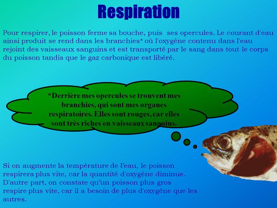 Respiration Pour respirer, le poisson ferme sa bouche, puis ses opercules. Le courant d'eau ainsi produit se rend dans les branchies* où l'oxygène con