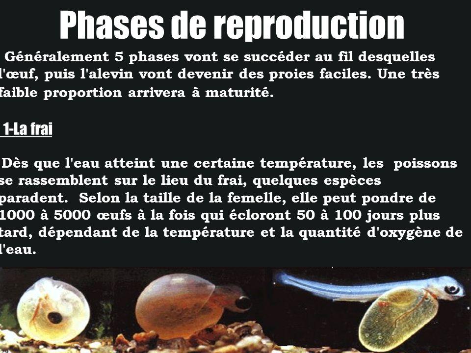 Phases de reproduction Généralement 5 phases vont se succéder au fil desquelles l'œuf, puis l'alevin vont devenir des proies faciles. Une très faible