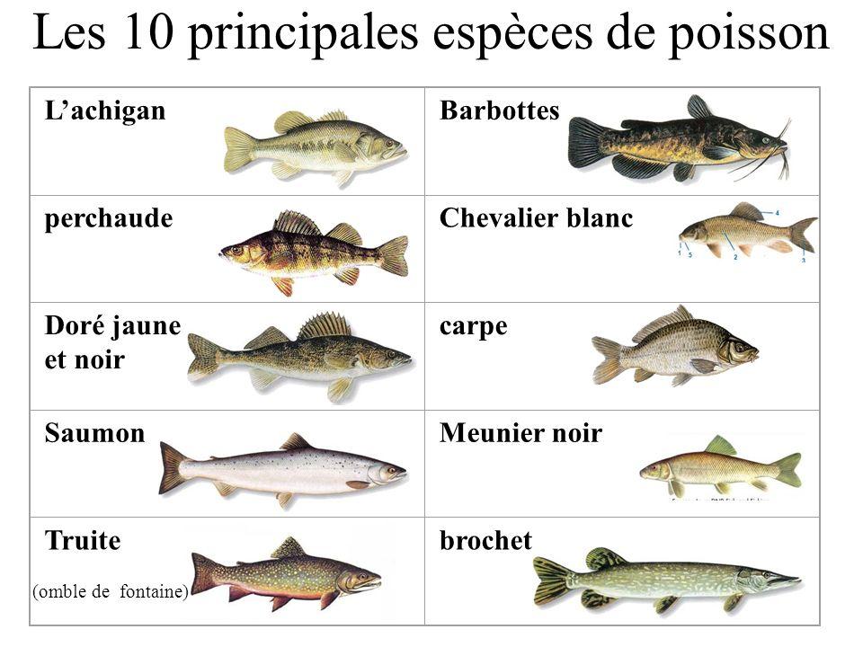 Les 10 principales espèces de poisson LachiganBarbottes perchaudeChevalier blanc Doré jaune et noir carpe SaumonMeunier noir Truitebrochet (omble de f