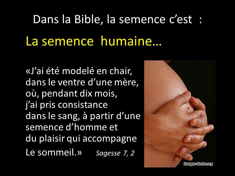 Dans la Bible, la semence cest : La semence humaine… «Jai été modelé en chair, dans le ventre dune mère, où, pendant dix mois, jai pris consistance dans le sang, à partir dune semence dhomme et du plaisir qui accompagne Le sommeil.» Sagesse 7, 2