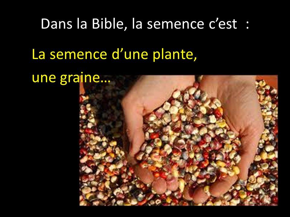 Dans la Bible, la semence cest : La semence dune plante, une graine…