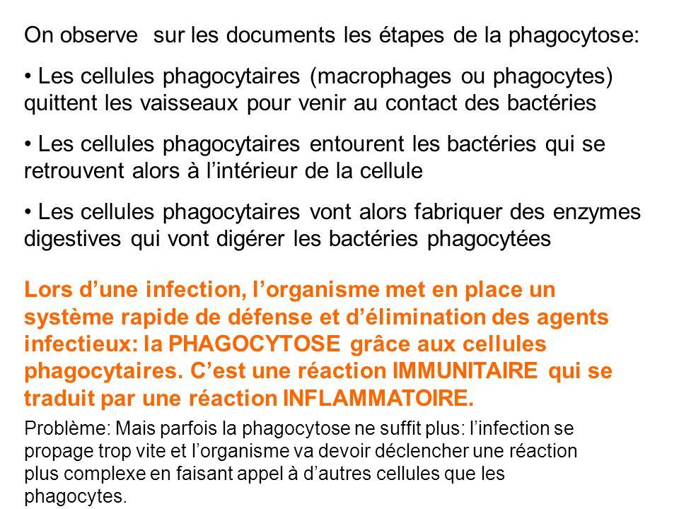 On observe sur les documents les étapes de la phagocytose: Les cellules phagocytaires (macrophages ou phagocytes) quittent les vaisseaux pour venir au contact des bactéries Les cellules phagocytaires entourent les bactéries qui se retrouvent alors à lintérieur de la cellule Les cellules phagocytaires vont alors fabriquer des enzymes digestives qui vont digérer les bactéries phagocytées Lors dune infection, lorganisme met en place un système rapide de défense et délimination des agents infectieux: la PHAGOCYTOSE grâce aux cellules phagocytaires.