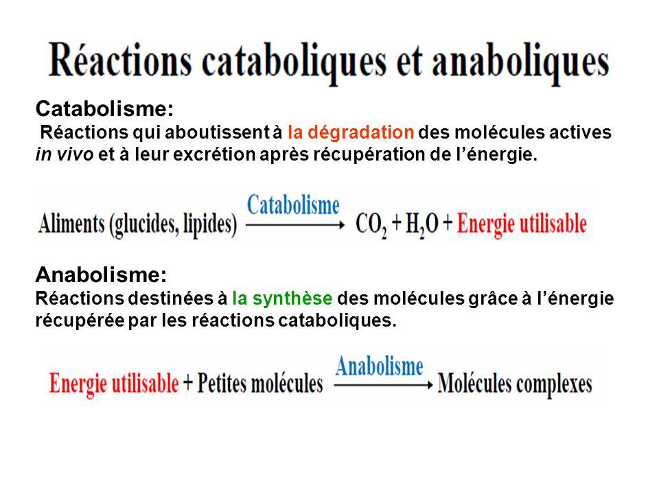 Catabolisme: Réactions qui aboutissent à la dégradation des molécules actives in vivo et à leur excrétion après récupération de lénergie. Anabolisme: