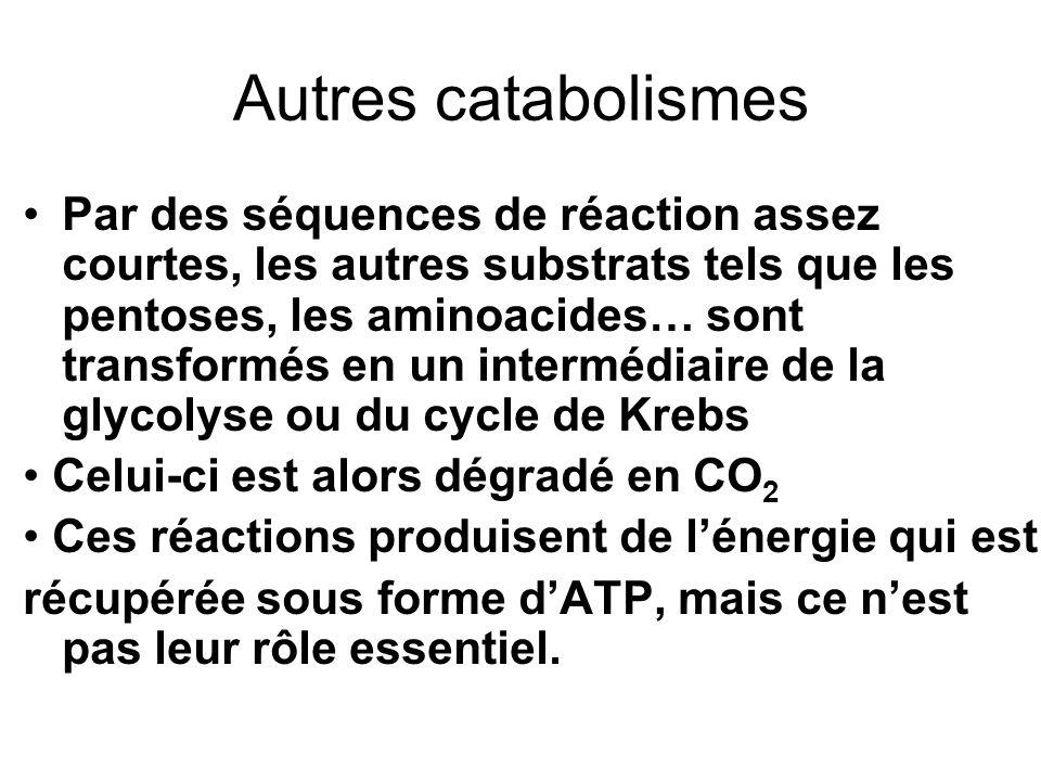 Autres catabolismes Par des séquences de réaction assez courtes, les autres substrats tels que les pentoses, les aminoacides… sont transformés en un i